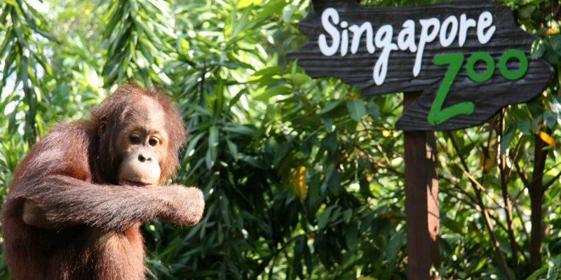 در دسترس ترین مکان های دیدنی سنگاپور
