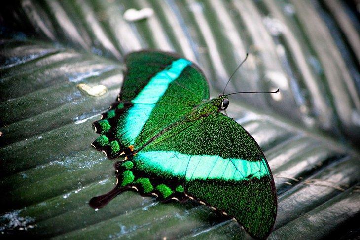 هنرستان پروانه نیاگارا کانادا