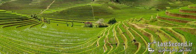 چشم اندازی بی بدیل مزارع برنج در بالی اندونزی