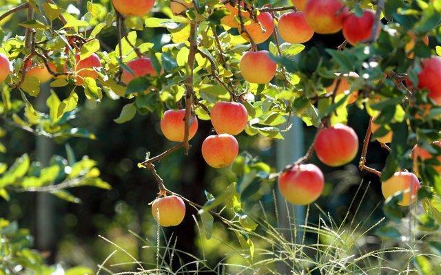 گزارشی از سرمازدگی باغها نداشتیم، میوه شب عید تامین است