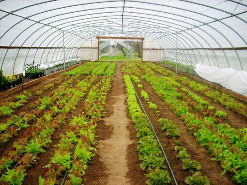 خبرنگاران 102 میلیارد تومان طرح کشاورزی در لرستان بهره برداری شد