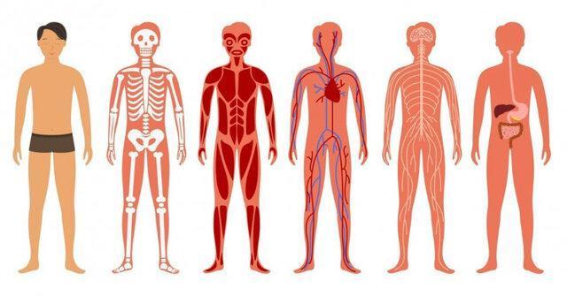 ساخت نقشه بدن انسان توسط گوگل