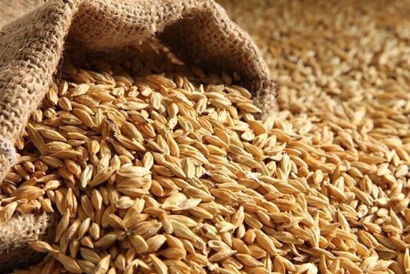 نمایشی از نفوذ نوآوری در صنعت نان و غلات